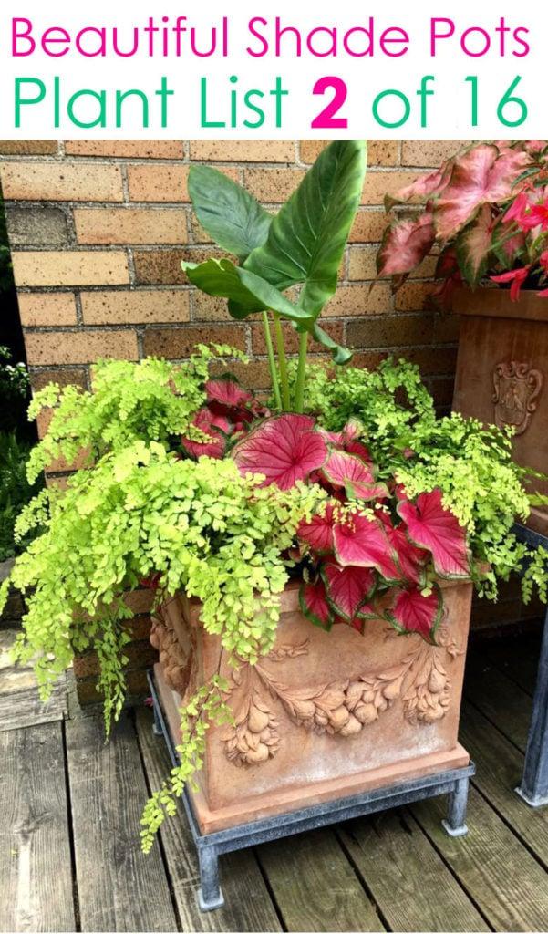 Tropical planter pots for shade