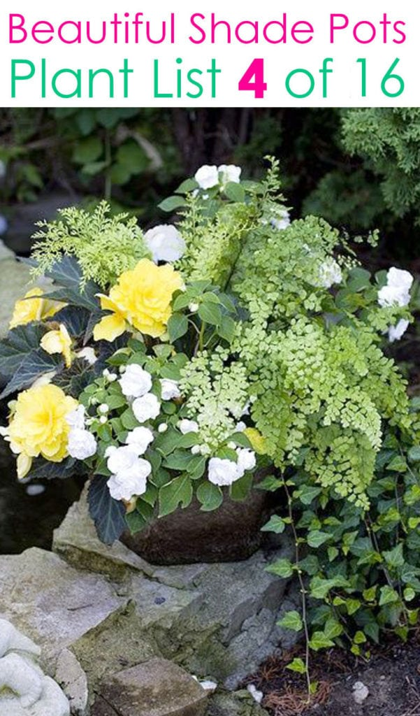 16 Colorful Shade Garden Pots Plant Lists A Piece Of Rainbow