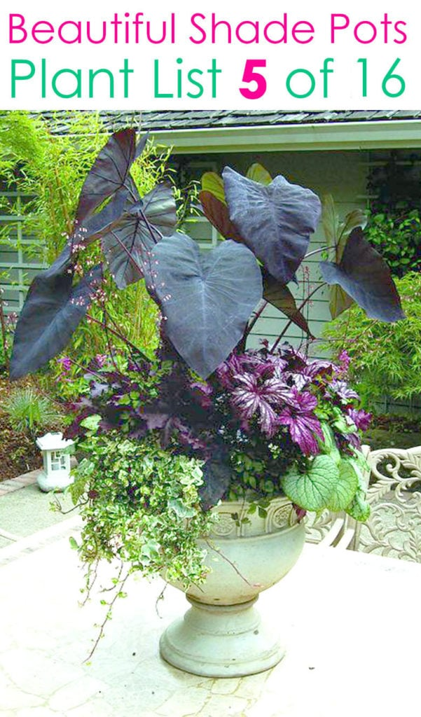 Tropical and exotic colorful container garden ideas for shade
