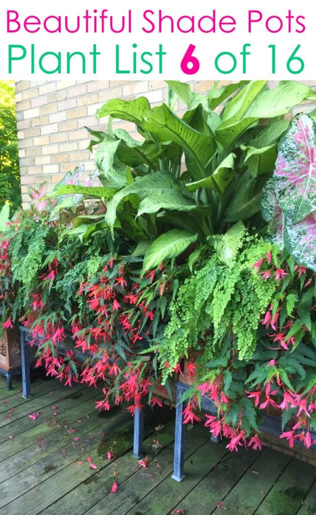Beautiful shade loving flowers red