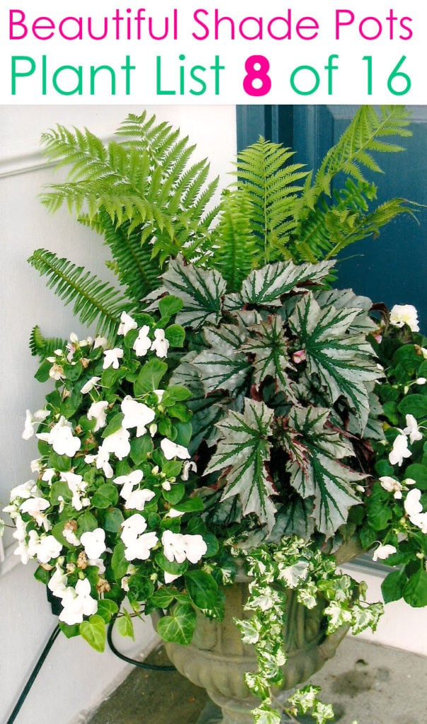 Showy shade planter design ideas