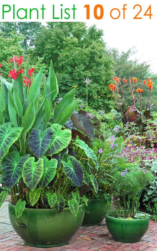 Tropical container patio garden ideas in water containers