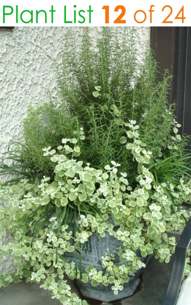 White and green plant combinations