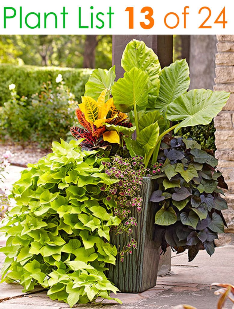 Mixed foliage planting designs