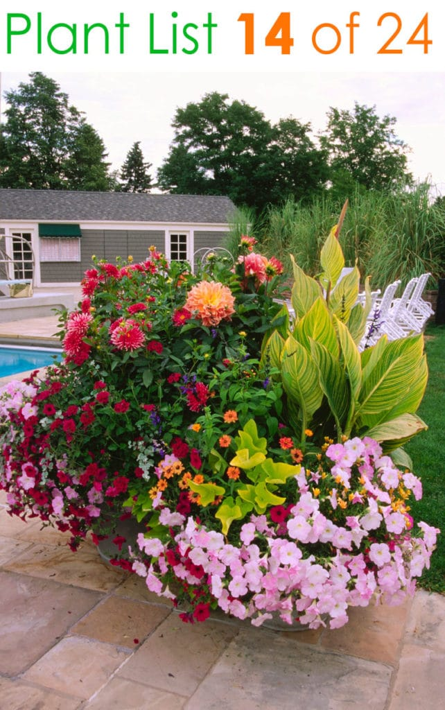 Beautiful container garden ideas with easy care flowers in pink, red, and orange