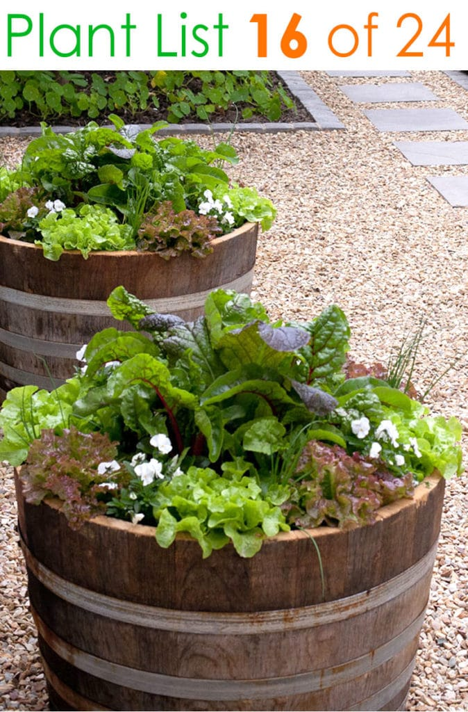 Herbs and vegetables in barrel planters
