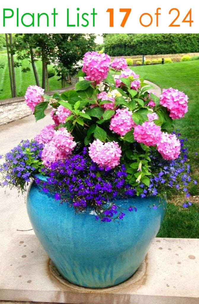 Colorful blue garden pot with pink flowers