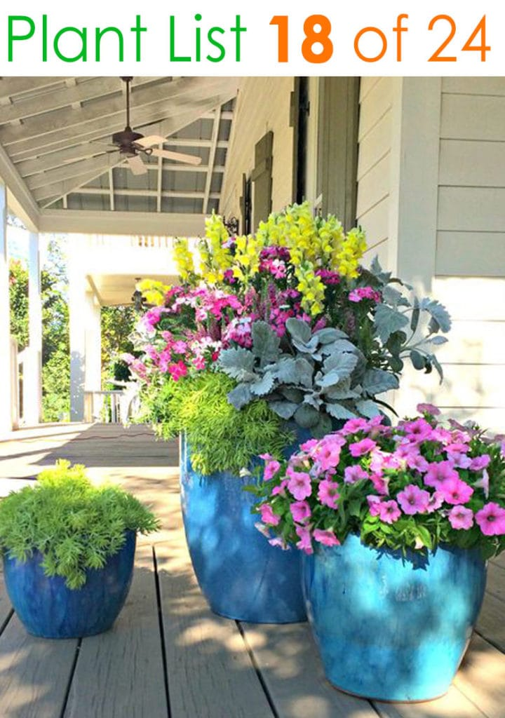 Colorful flower pots on porch