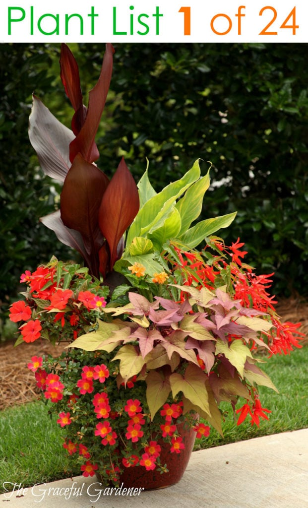 beautiful Container garden planting design with red flowers