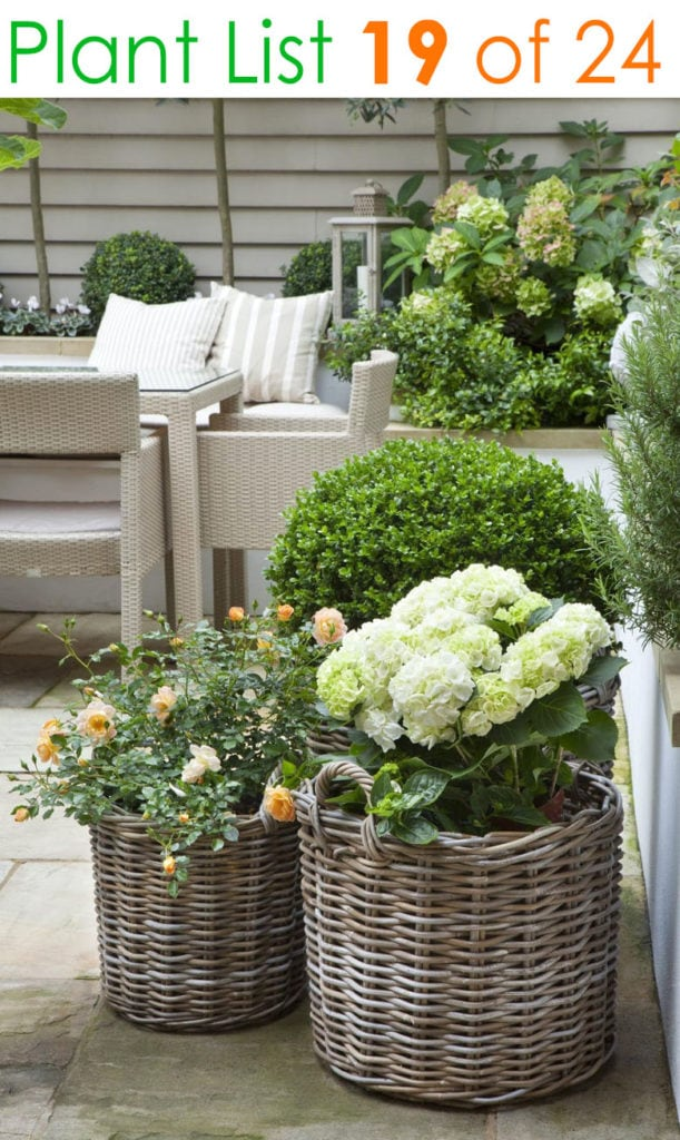 Farmhouse patio garden ideas