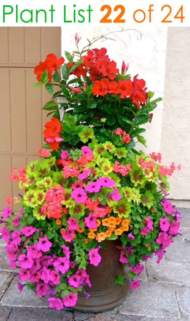 Colorful pink and red flower planters