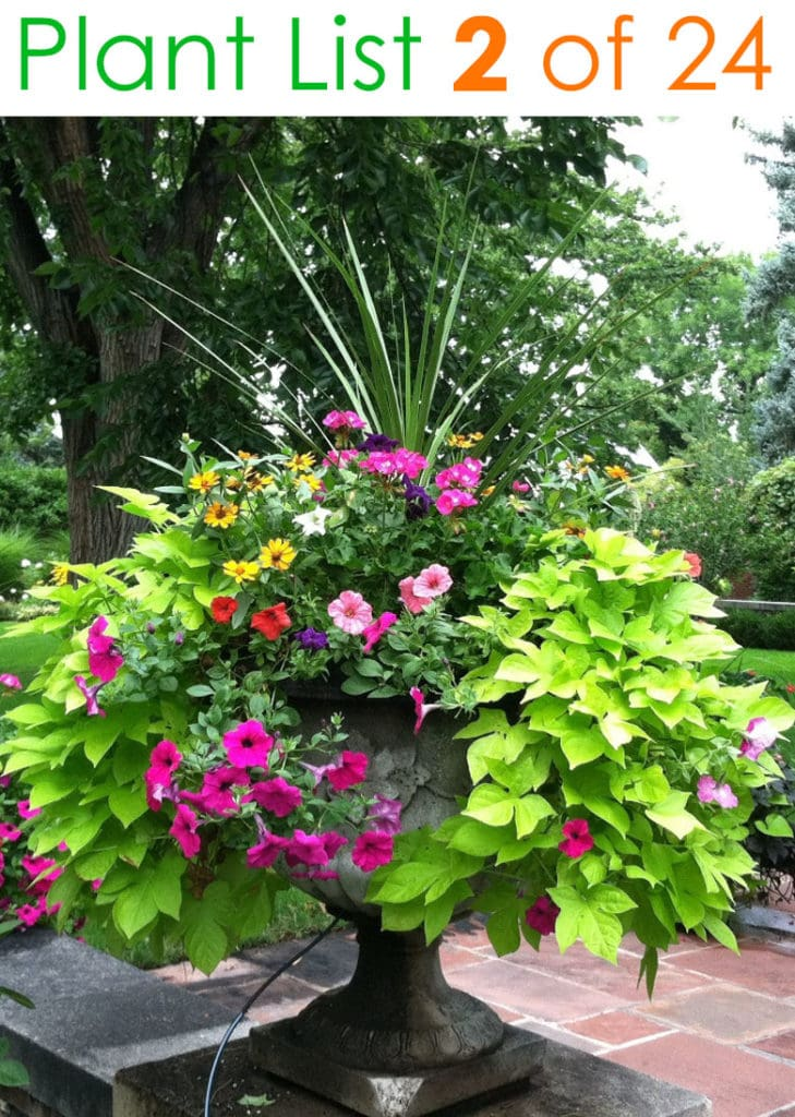 Colorful urn container garden ideas