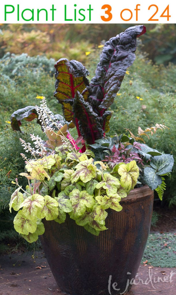 Edible container garden ideas with red chard