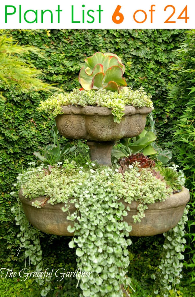 Mixed succulent container garden ideas
