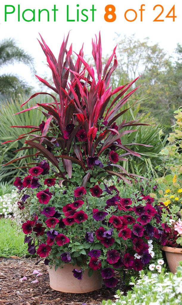 Mixed flower pot plants ideas in showy burgundy colors