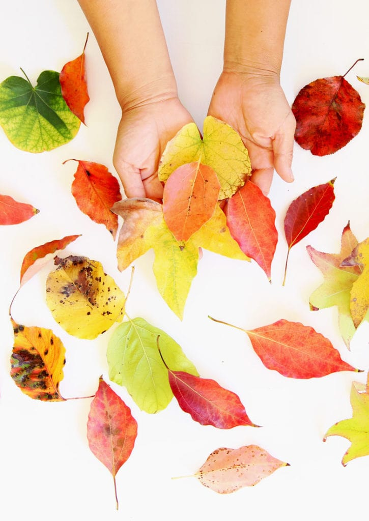 colorful autumn leaves with fall colors to make leaf art