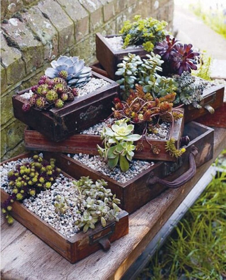 Repurpose vintage drawer boxes into succulent garden