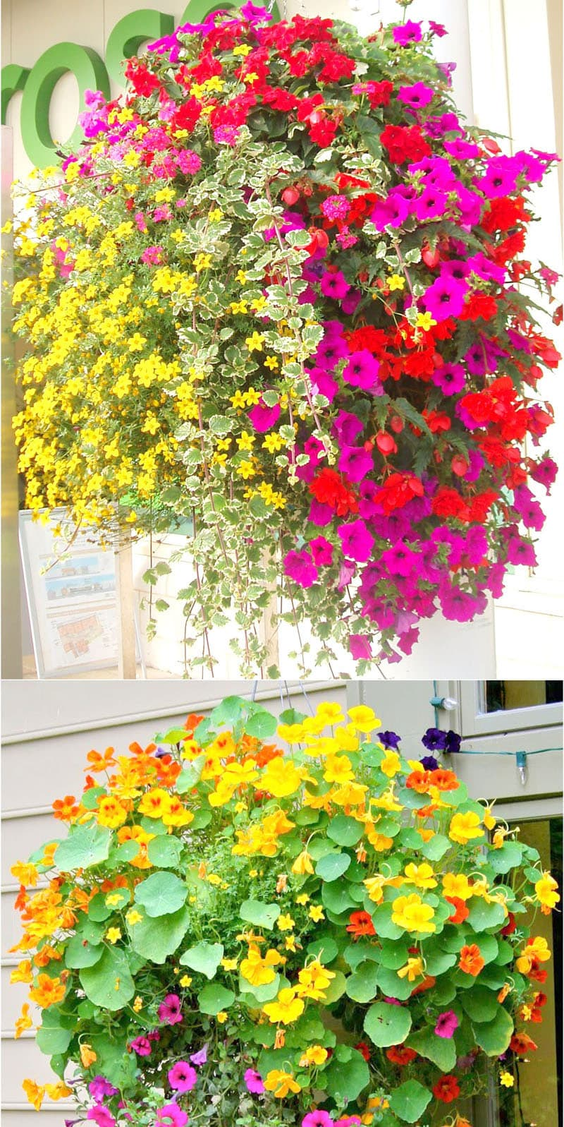beautiful hanging baskets with yellow and pink flowers