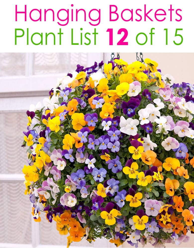 very colorful hanging planter with pansies and violas