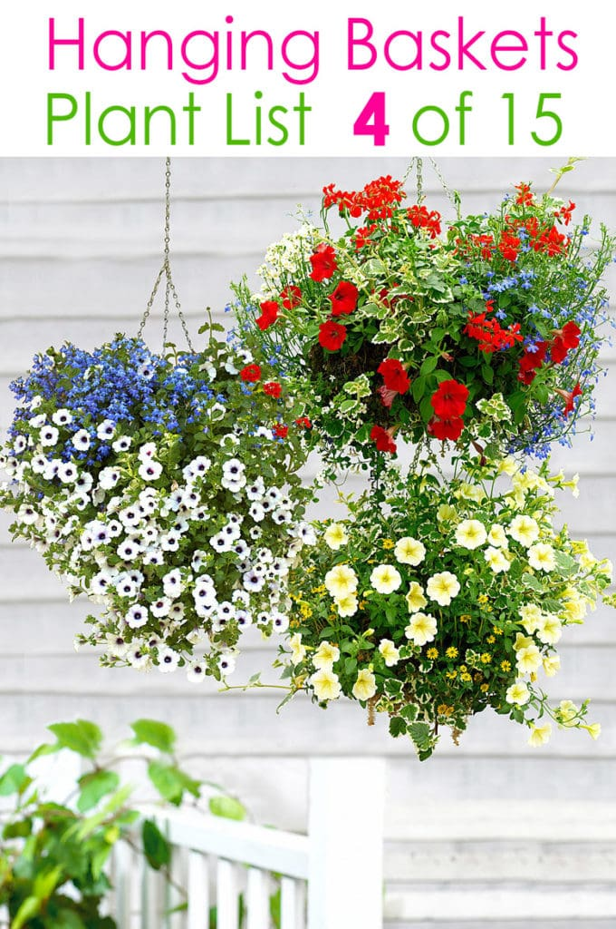 how to plant beautiful hanging baskets with flowers