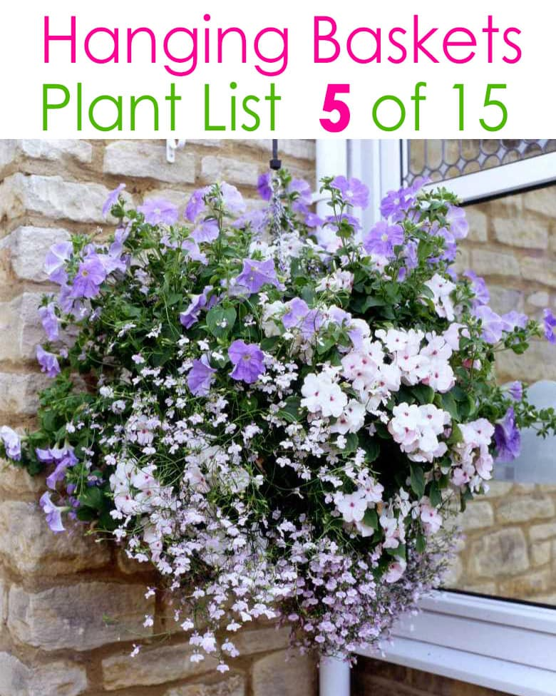 purple and white hanging flower basket