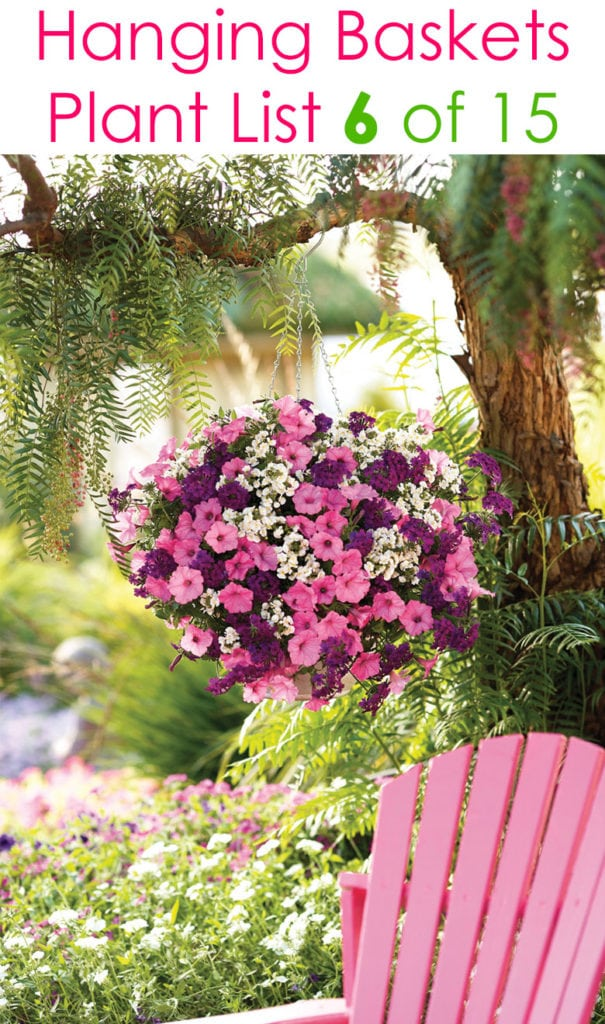pink flowers in hanging planter