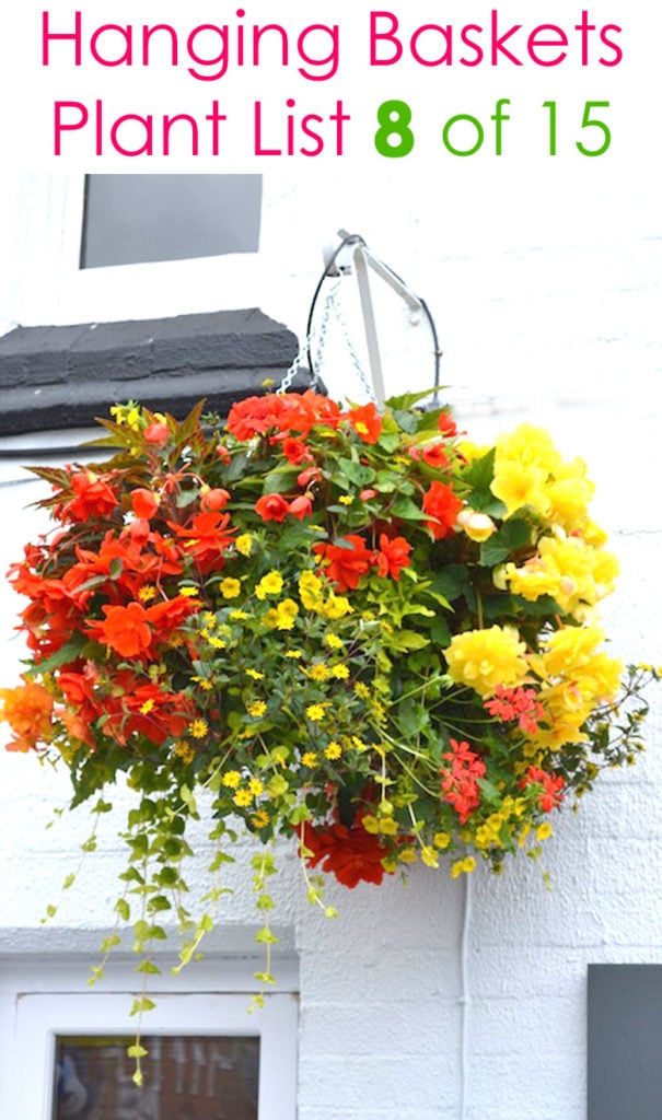 colorful hanging basket in the shade