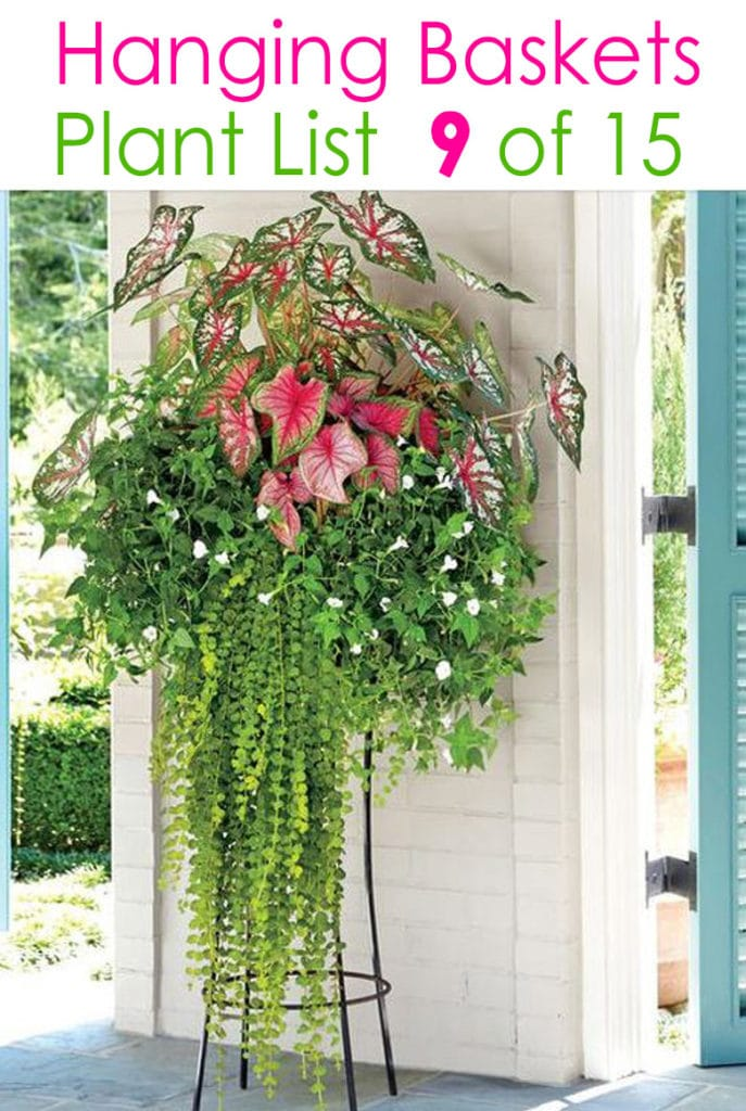tropical hanging planter with shade plants