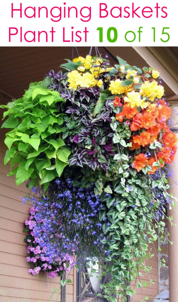 beautiful colorful hanging basket with shade loving plants