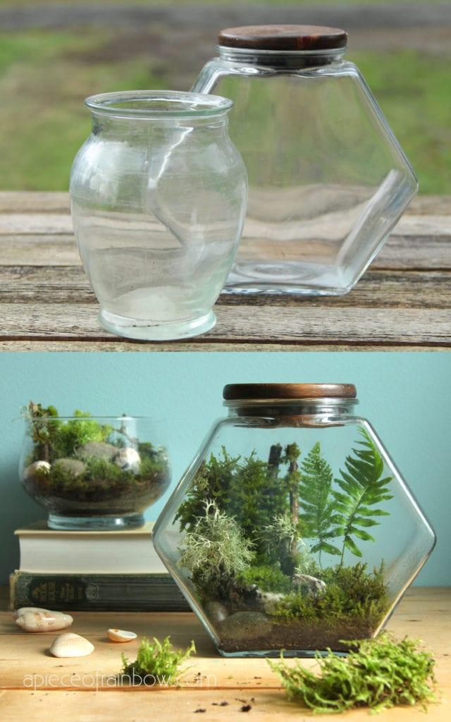 Create a mini jungle terrarium