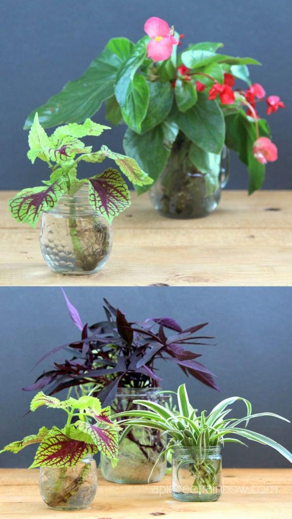 Make an indoor water garden