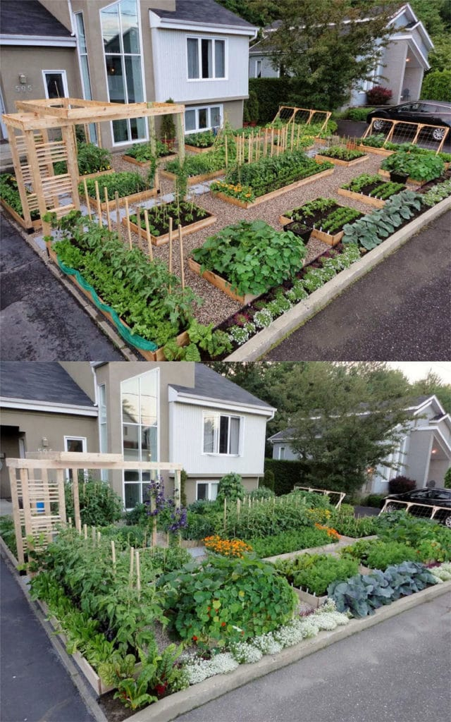 attractive Front yard vegetable garden layout and design