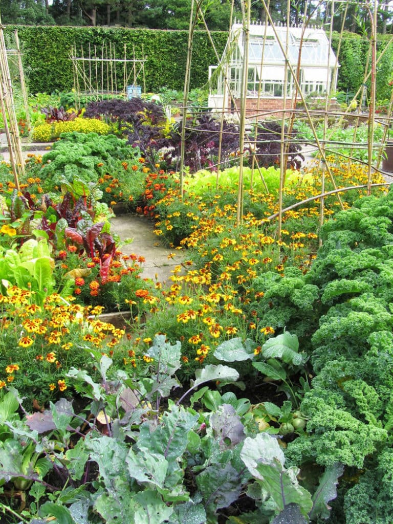 companion planting with vegetables, herbs and flowers together