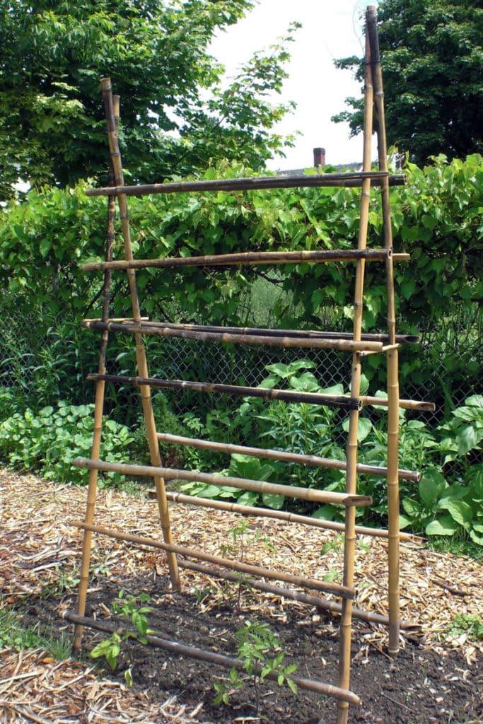 Bamboo ladder trellis