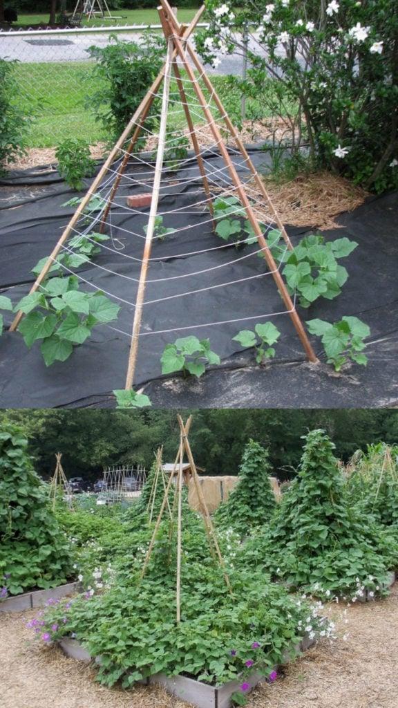 how to build Teepee garden trellis