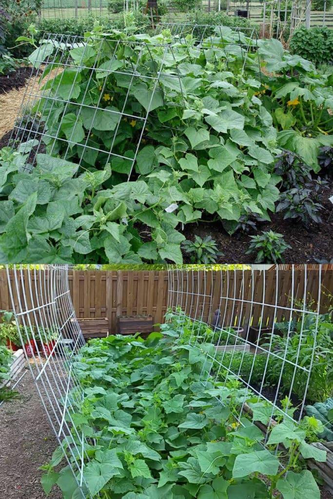 Hardware fence panel cucumber trellis