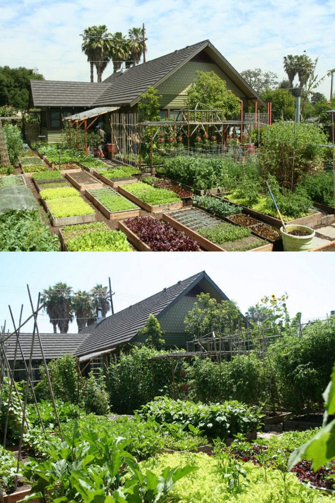 8 Easy Steps To Start Your Best Vegetable Garden A Piece Of Rainbow
