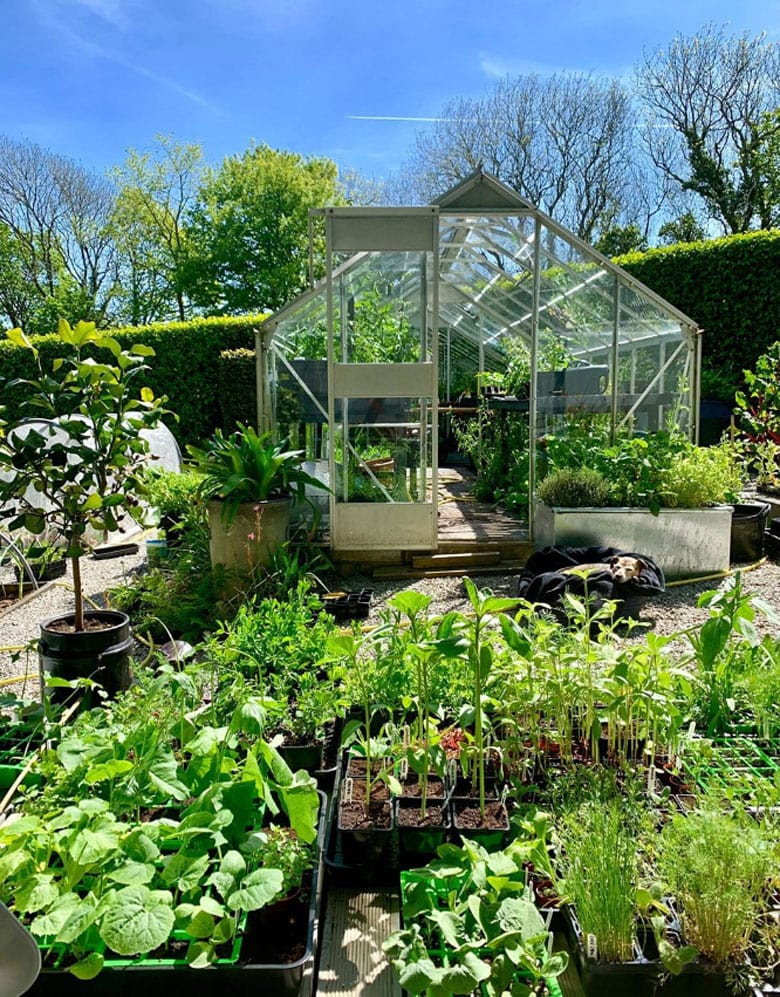 beautiful kitchen garden with greenhouse