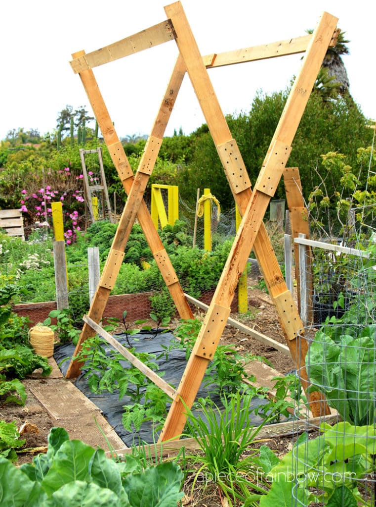DIY tomato trellis support with wood