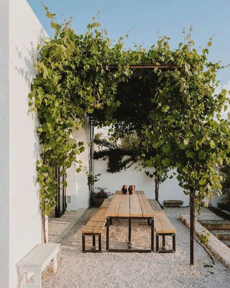 modern patio ideas with shade pergola and grape vines