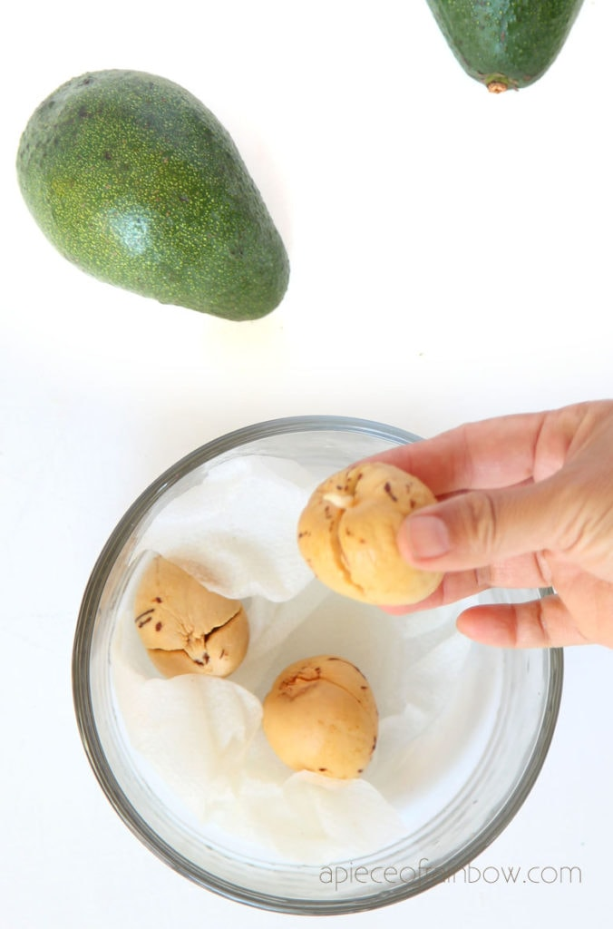 sprouting avocado seeds on paper towel