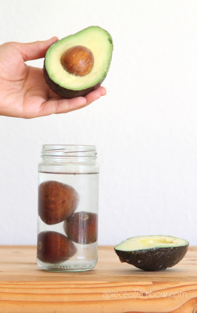 soak avocado seeds in water
