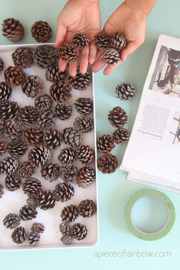 pine cones for crafts