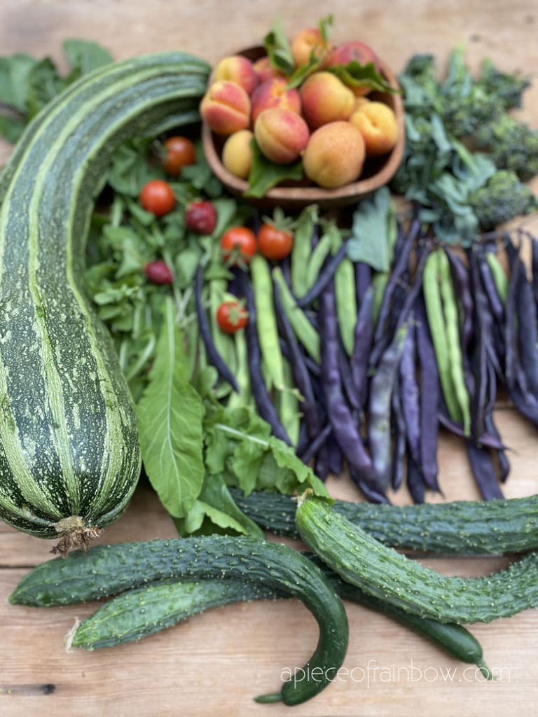 16 easiest vegetables to grow for even first time beginner gardeners! Fast growing from seeds, in pots & gardens for all year round harvest!