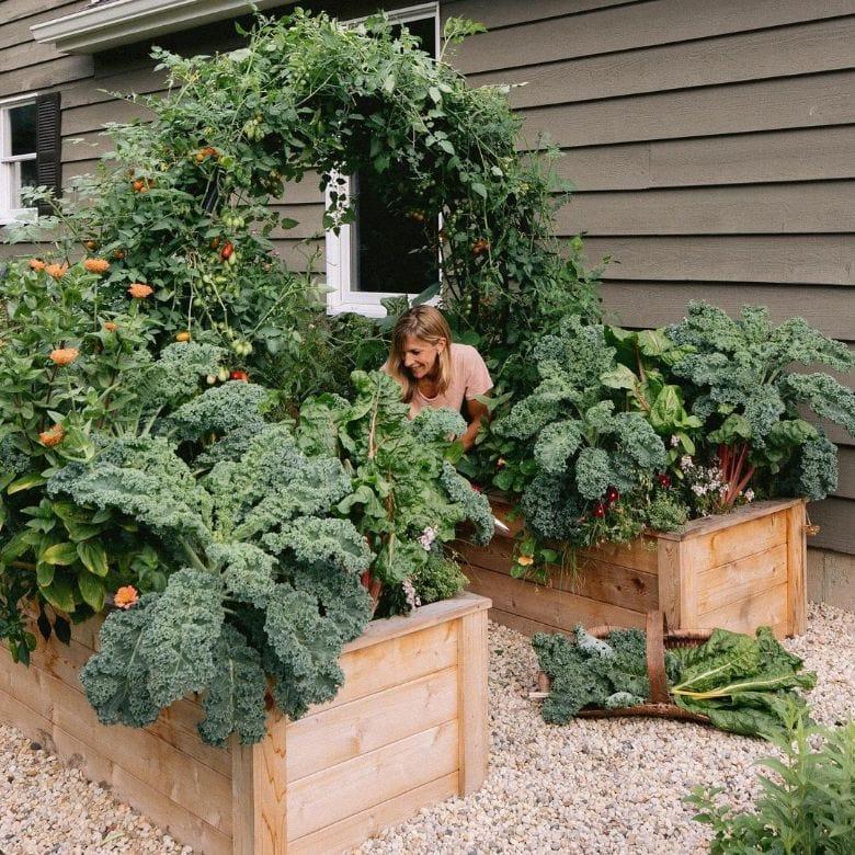 kale in raised bed vegetable garden
