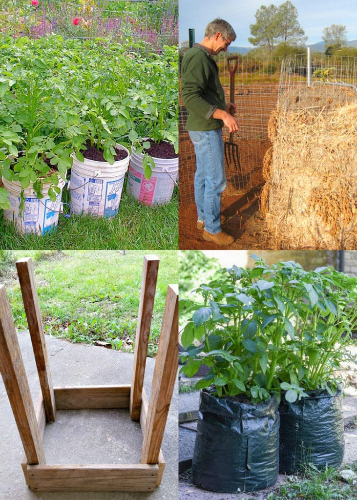 How to grow potatoes in containers, bags, pots, gallon buckets, & DIY wood planters.
