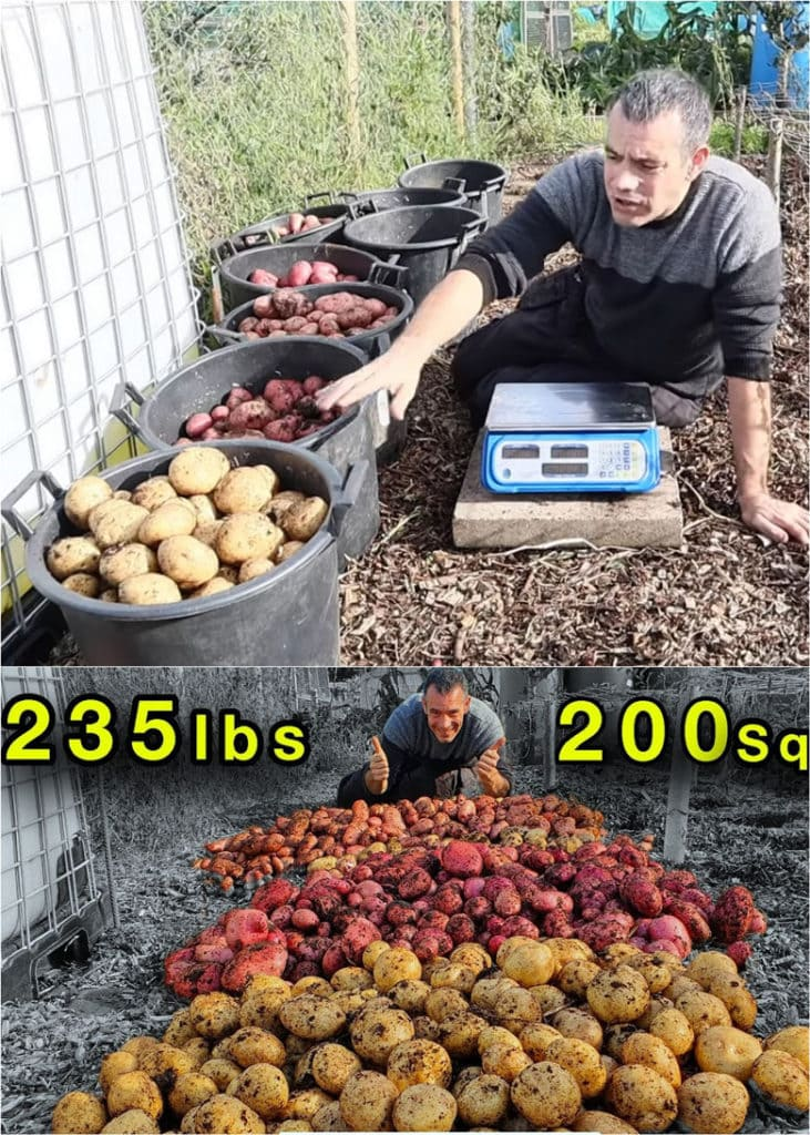 how to grow lots of potatoes in pots or bags