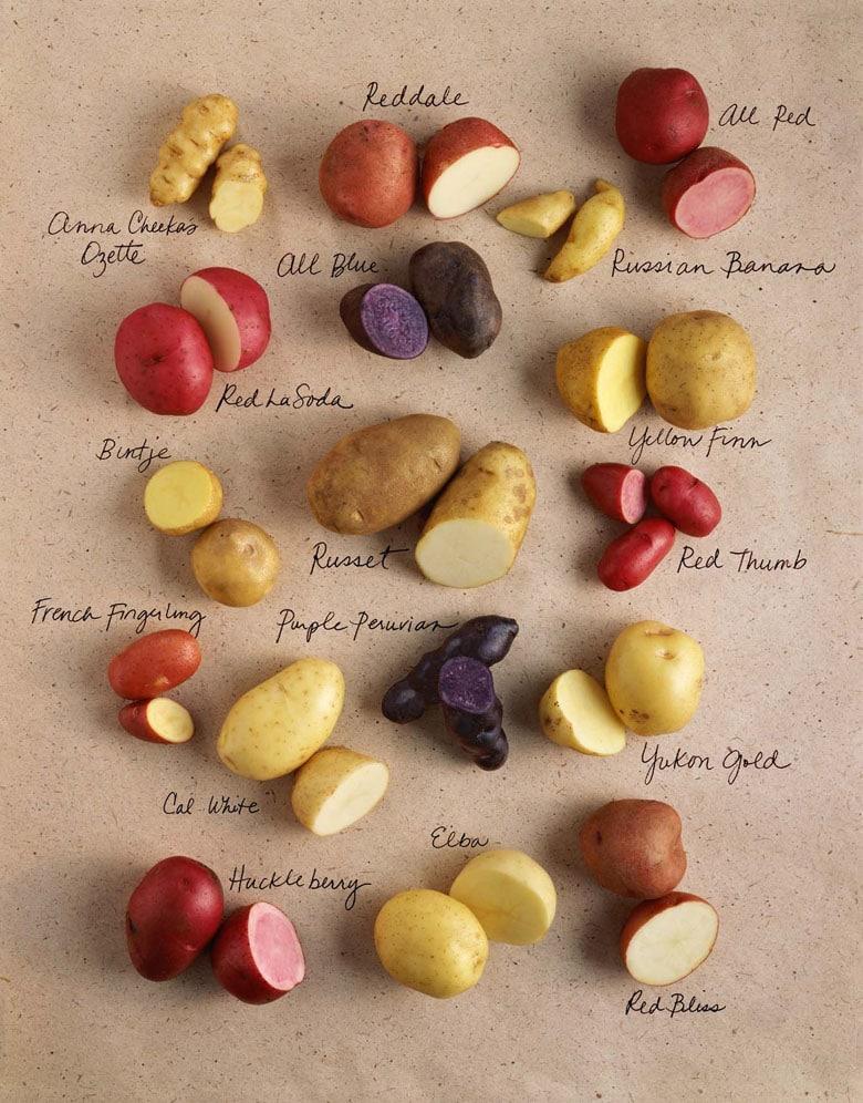 colorful Potato varieties chart
