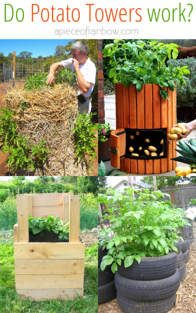 Why potato towers don't work! How to grow potatoes vertically in DIY wire cage, straw mound, bag, or wood box with big yields & best results.