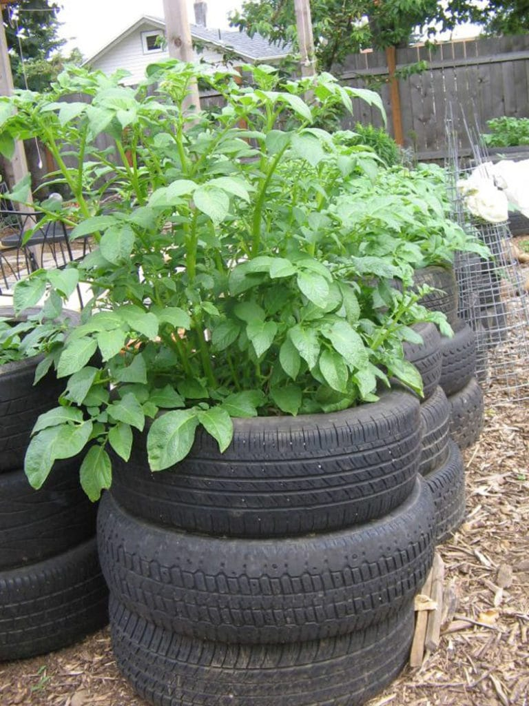 stacked rubber tire potato planter and tower